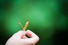 Πεταλούδα σε ετοιμότητα του κοριτσιού, πράσινο υπόβαθρο θαμπάδων bokeh, εστίαση στο μάτι, έννοια αρμονίας φύσης, με το διάστημα α Στοκ φωτογραφία με δικαίωμα ελεύθερης χρήσης