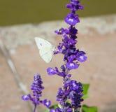 Πεταλούδα στα λογικά λουλούδια Στοκ φωτογραφία με δικαίωμα ελεύθερης χρήσης
