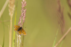 Πεταλούδα στην κλίση Στοκ Φωτογραφίες