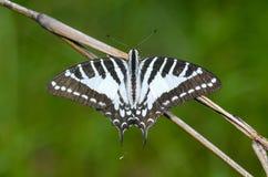 Πεταλούδα στη φύση Στοκ εικόνες με δικαίωμα ελεύθερης χρήσης