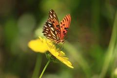 Πεταλούδα στη φύση Στοκ Εικόνες