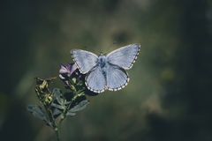Πεταλούδα στη χλόη στο κατώφλι μου Στοκ εικόνες με δικαίωμα ελεύθερης χρήσης