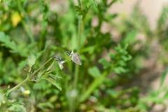 Πεταλούδα στη χλόη gree Στοκ Εικόνα