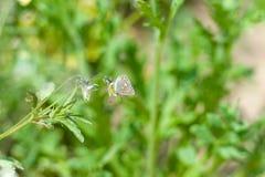 Πεταλούδα στη χλόη gree Στοκ εικόνες με δικαίωμα ελεύθερης χρήσης