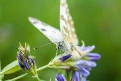 Πεταλούδα στις εγκαταστάσεις Στοκ εικόνα με δικαίωμα ελεύθερης χρήσης