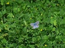 Πεταλούδα στις πράσινες εγκαταστάσεις στοκ φωτογραφία με δικαίωμα ελεύθερης χρήσης