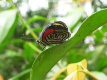 Πεταλούδα στις πτώσεις Iguazu στοκ φωτογραφία