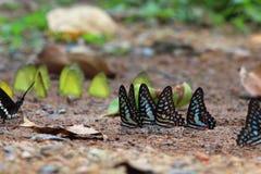 Πεταλούδα στο δάσος Στοκ εικόνες με δικαίωμα ελεύθερης χρήσης