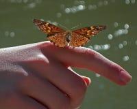 Πεταλούδα στο δάχτυλο στοκ εικόνες