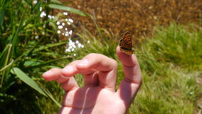 Πεταλούδα στο δάχτυλο Στοκ Φωτογραφίες