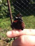 Πεταλούδα στο δάχτυλό μου Στοκ εικόνες με δικαίωμα ελεύθερης χρήσης