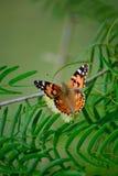 Πεταλούδα στο δέντρο Στοκ εικόνες με δικαίωμα ελεύθερης χρήσης