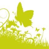 Πεταλούδα στο λουλούδι Στοκ εικόνες με δικαίωμα ελεύθερης χρήσης