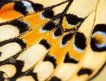 Πεταλούδα στο λουλούδι Στοκ εικόνα με δικαίωμα ελεύθερης χρήσης