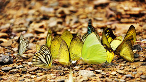 Πεταλούδα στο ταϊλανδικό εθνικό πάρκο Στοκ φωτογραφίες με δικαίωμα ελεύθερης χρήσης