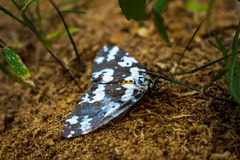 Πεταλούδα στο τροπικό δάσος, Ταϊλάνδη Στοκ φωτογραφία με δικαίωμα ελεύθερης χρήσης