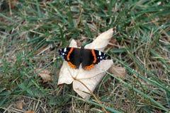 Πεταλούδα στο φύλλο Στοκ Φωτογραφίες