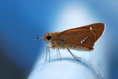 Πεταλούδα της Ταϊβάν σε ένα κιγκλίδωμα Στοκ Εικόνες