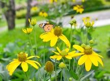 Πεταλούδα φύσης Στοκ Φωτογραφία