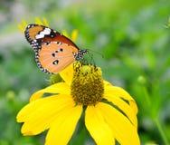 Πεταλούδα φύσης Στοκ φωτογραφία με δικαίωμα ελεύθερης χρήσης