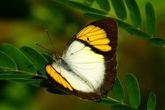 Πεταλούδα, όμορφα και ζωηρόχρωμα έντομα Στοκ Εικόνα