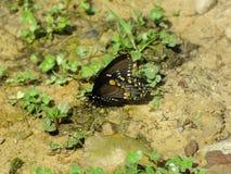 Πεταλούδα 006 Στοκ Εικόνες