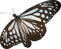 Πεταλούδα ελεύθερη απεικόνιση δικαιώματος