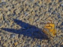 Πεταλούδα 02 Στοκ φωτογραφία με δικαίωμα ελεύθερης χρήσης