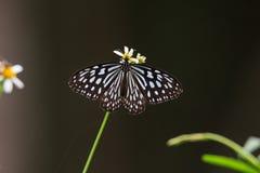 Πεταλούδα Στοκ φωτογραφία με δικαίωμα ελεύθερης χρήσης