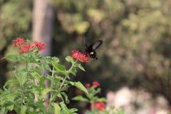 Πεταλούδα Στοκ Φωτογραφίες