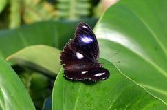 Πεταλούδα Στοκ εικόνες με δικαίωμα ελεύθερης χρήσης