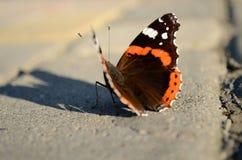Πεταλούδα Ange Στοκ φωτογραφία με δικαίωμα ελεύθερης χρήσης