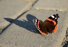 Πεταλούδα Ange Στοκ φωτογραφίες με δικαίωμα ελεύθερης χρήσης
