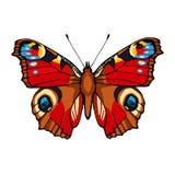 Πεταλούδα Peacock. Συρμένη χέρι διανυσματική απεικόνιση Στοκ εικόνες με δικαίωμα ελεύθερης χρήσης