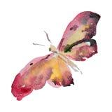 Πεταλούδα Watercolor στην άσπρη απεικόνιση υποβάθρου Στοκ Εικόνες