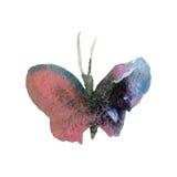 Πεταλούδα Watercolor στην άσπρη απεικόνιση υποβάθρου Στοκ εικόνες με δικαίωμα ελεύθερης χρήσης