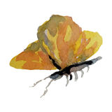 Πεταλούδα Watercolor στην άσπρη απεικόνιση υποβάθρου Στοκ φωτογραφία με δικαίωμα ελεύθερης χρήσης