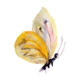 Πεταλούδα Watercolor στην άσπρη απεικόνιση υποβάθρου Στοκ Φωτογραφίες
