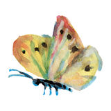 Πεταλούδα Watercolor στην άσπρη απεικόνιση υποβάθρου Στοκ εικόνα με δικαίωμα ελεύθερης χρήσης