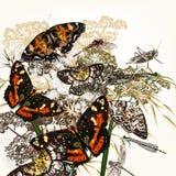 πεταλούδες ανασκόπησης floral Στοκ φωτογραφία με δικαίωμα ελεύθερης χρήσης