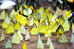πεταλούδες ζωηρόχρωμες Στοκ εικόνες με δικαίωμα ελεύθερης χρήσης