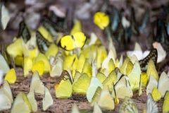 πεταλούδες ζωηρόχρωμες Στοκ φωτογραφία με δικαίωμα ελεύθερης χρήσης
