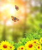 Πεταλούδες και θερινά λουλούδια Στοκ Εικόνα