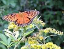 Πεταλούδες και σφήκες Στοκ Εικόνα
