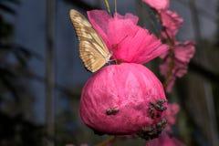 Πεταλούδες στη ημέρα των Χριστουγέννων Στοκ Φωτογραφίες