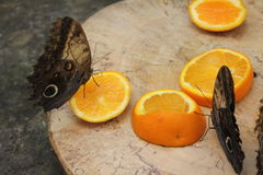 Πεταλούδες στον κήπο των πεταλούδων Στοκ φωτογραφίες με δικαίωμα ελεύθερης χρήσης