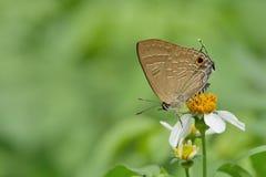 Πεταλούδες της Ταϊβάν Στοκ εικόνα με δικαίωμα ελεύθερης χρήσης