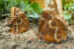 πεταλούδες δύο Στοκ φωτογραφία με δικαίωμα ελεύθερης χρήσης