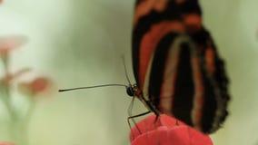 πεταλούδες απόθεμα βίντεο