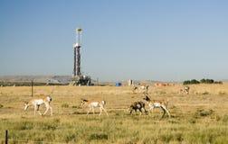 πετρέλαιο πεδίων Στοκ Εικόνα